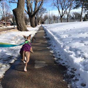 Walking dog along a snowy street