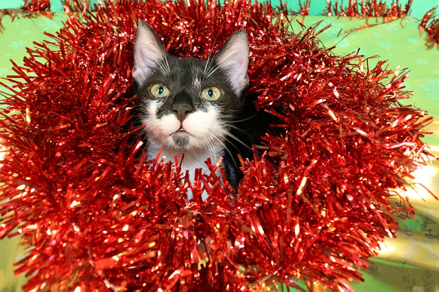 kitten with a red holiday wreath around her