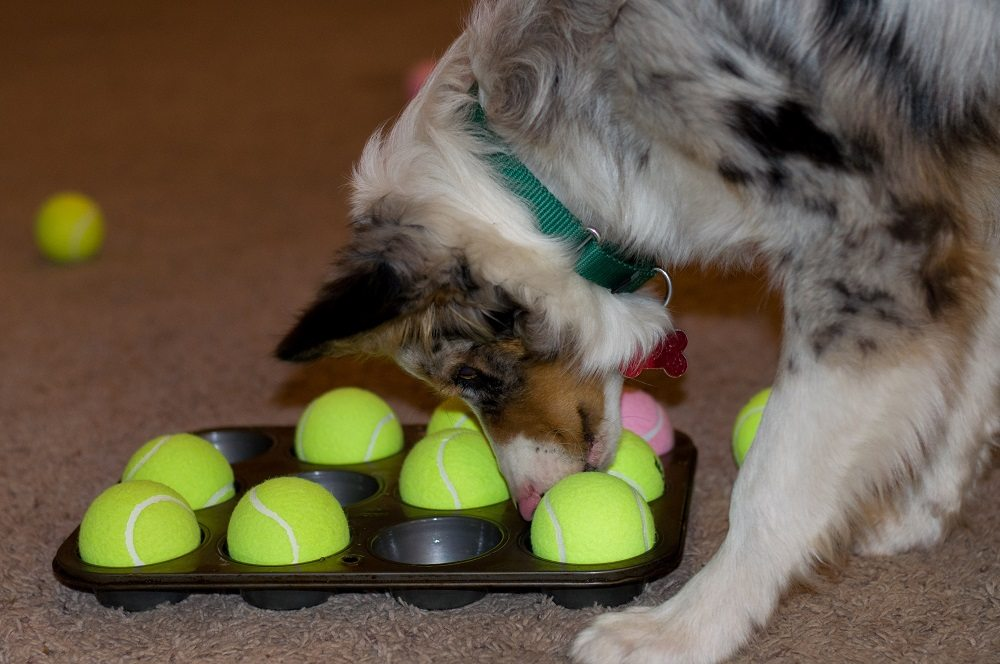 Indoor Games for Cats and Dogs 1