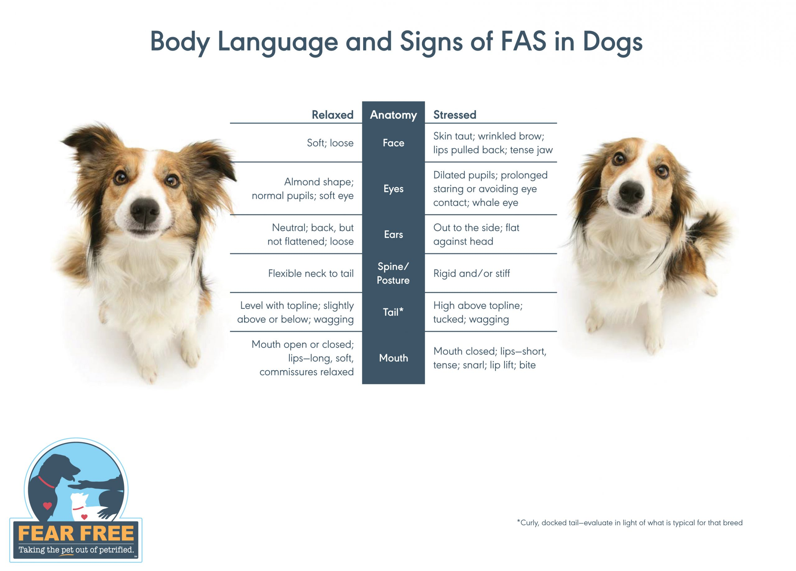 How to Tell If Your Dog is Fearful, Anxious, or Stressed 2