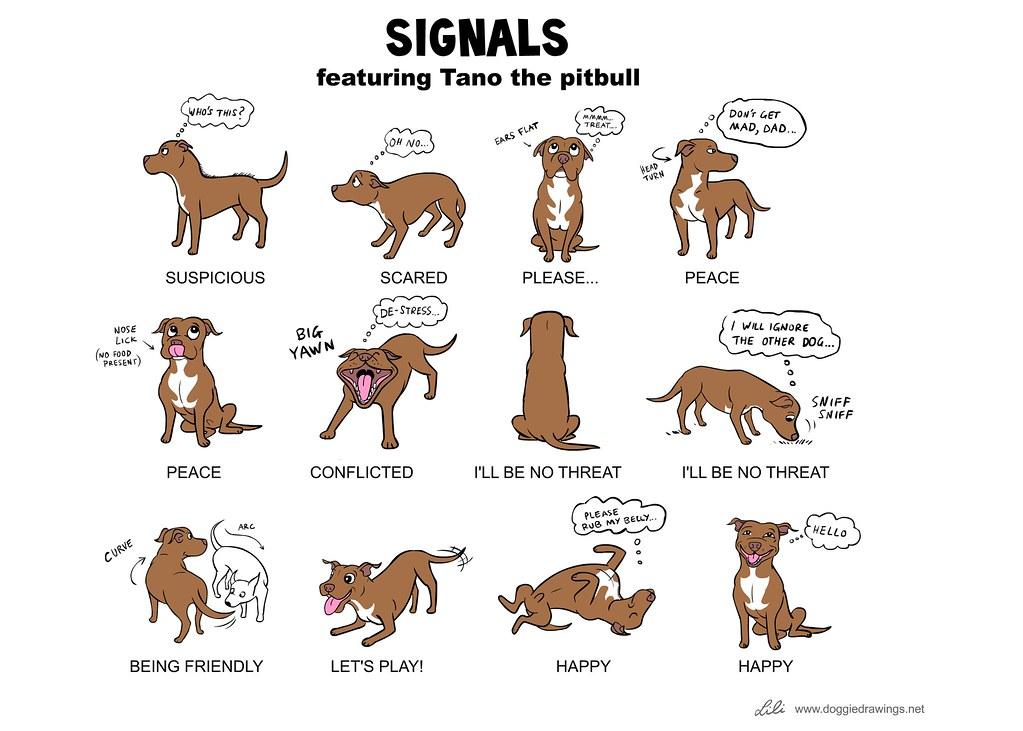Dog Body Language 3