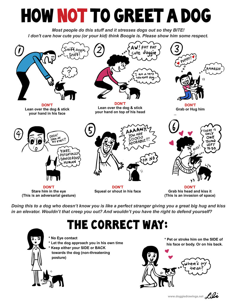 How NOT to Greet a Dog 1
