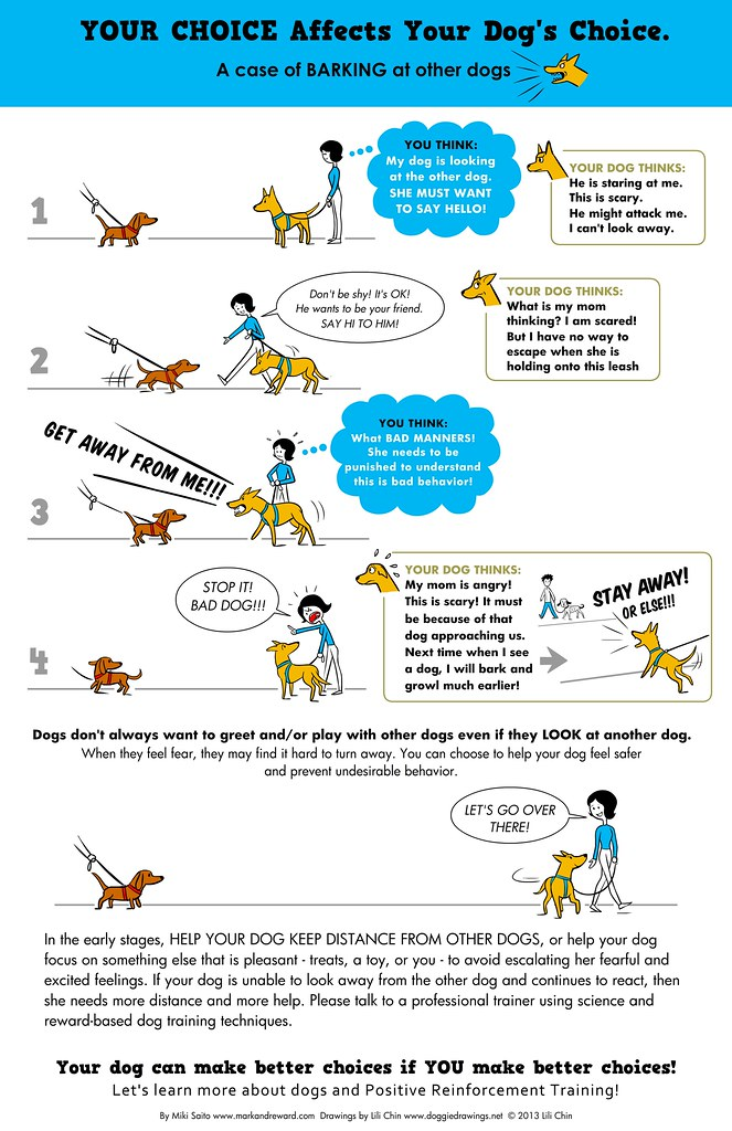 How Our Choices Effect Our Dog's Barking 1