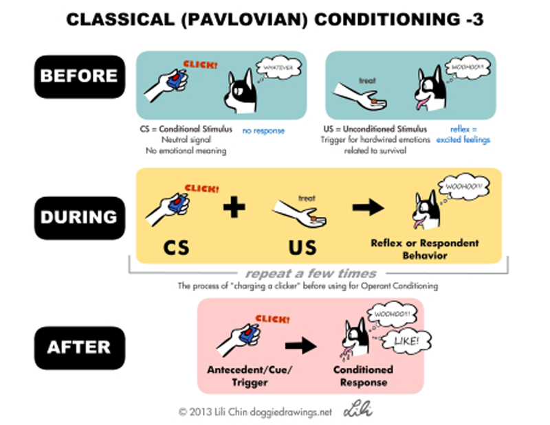 Classical Conditioning - Creating good feelings about things 4