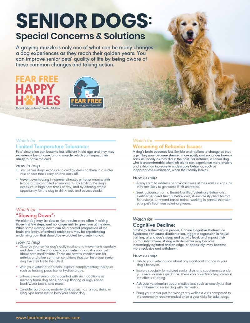 Happy Homes Senior Dog Handout Edited